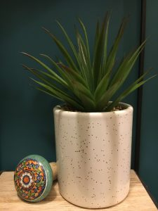Artificial Succulent with cork top